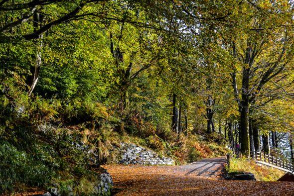 Autumn on Fløyen's Slopes | Life: A Scot in Norway