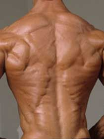 muscle grand dorsal