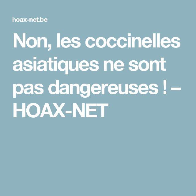 Non, les coccinelles asiatiques ne sont pas dangereuses ! – HOAX-NET
