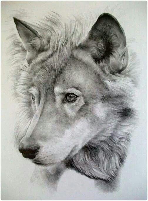 Dog/Wolf Art