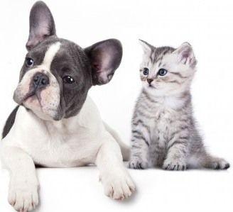 nos remèdes naturels ou non contre les puces du chien et du chat