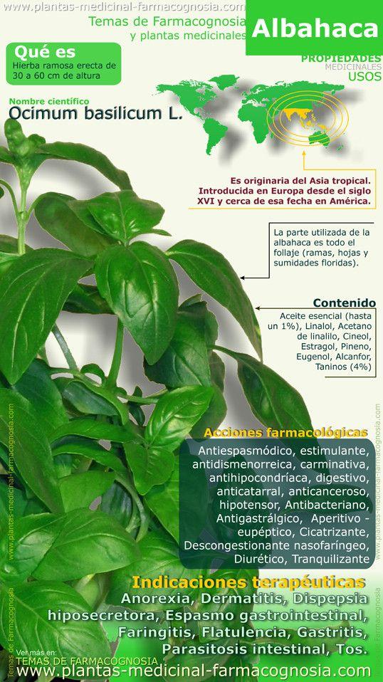 Infografía. Resumen de las características generales de la planta de Albahaca. Nombre científico. Usos medicinales más comunes, propiedades y beneficios de la Albahaca.