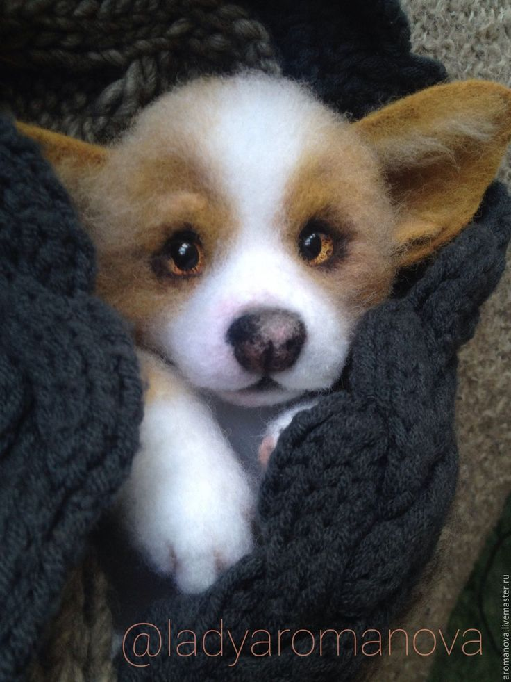 Купить Щенок корги (дом нашел) - бежевый, корги, щенок, щенок из шерсти, веселый подарок
