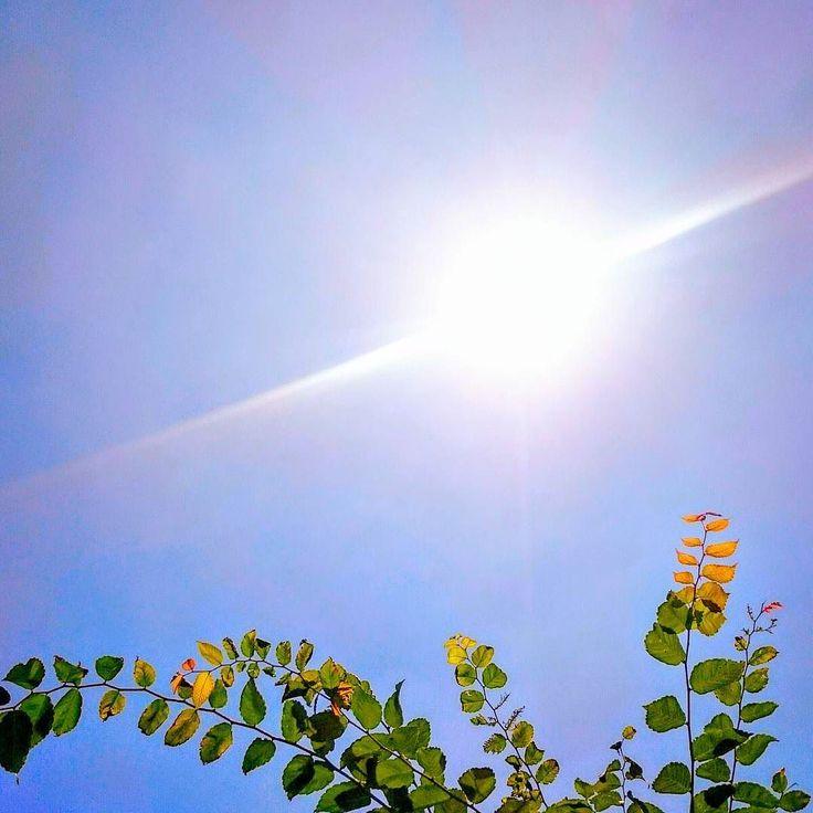 真夏の陽射し よいこは外に出ちゃいけない時間かも ゲリラ豪雨来ないかな(;; #暑い  #夏 #空 #太陽 #青空 #夏空  #summer #sky #skyline #sun #sunshine #bluesky #green #japan #landscape #today #daily #sunnyday  #instagram #instagramjapan #instagood #instalike #instaoftheday #picoftheday #photooftheday