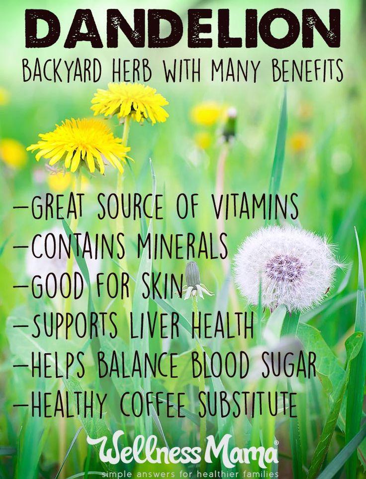 Dandelion – A Backyard Herb with Many Benefits