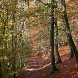 High Bank woods on the Croft Estate photo Debbie Wingfield - ancient Celts and trees