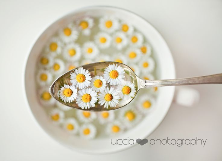 Lunch of spring! | Flickr - Photo Sharing!