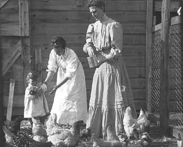 Women and child feeding chickens, c.1905. Photograph by Emil King. Minnesota farm families worked together to survive on the land. They also worked with hired hands, community members, animals, and machines. Minnesota Historical Society