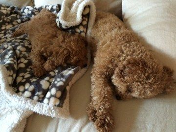 """Rule number one: Don't touch the fluff during nap time."" 