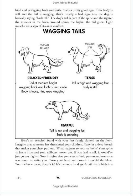 Paradigm Shifts In Dog Training