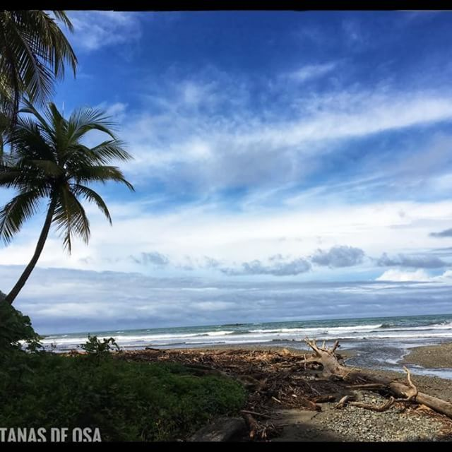 One of the beautiful beaches in the South Zone, quiet and clean. #playaventanas #costarica #puravida #palmtrees #bluesky #wanderlust #sand #cleanbeaches #beach #clouds #cloudporn