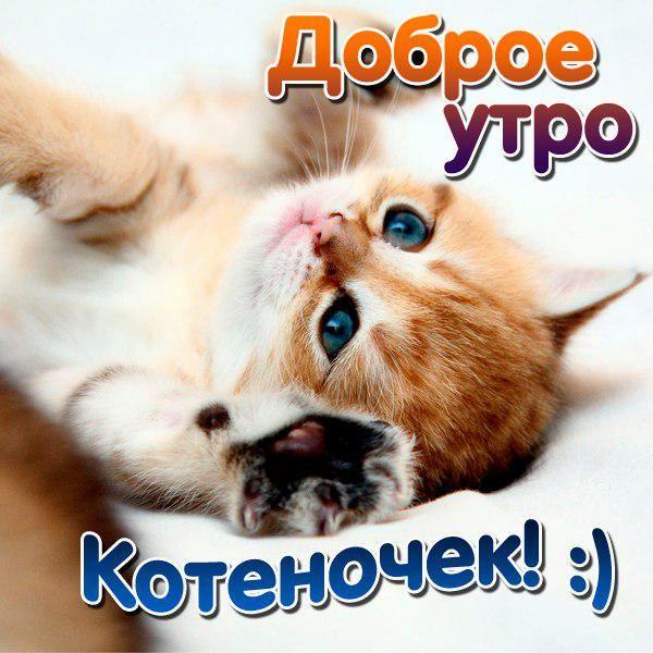 Kartinki Dobroe Utro Kotenok 43 Foto S Izobrazheniyami