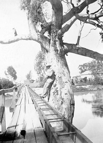 The flume bridge. The flume carried waste water to market gardens. Warracknabeal, c1900.