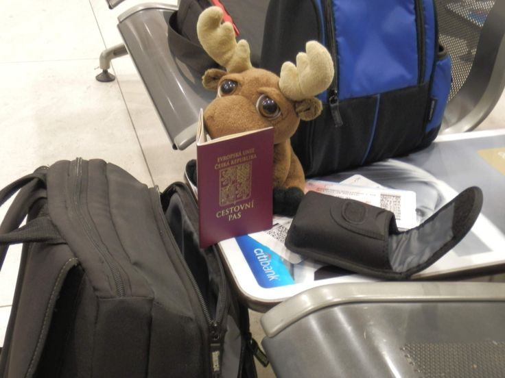 Mr. Moose waiting for his flight to Baltimore.