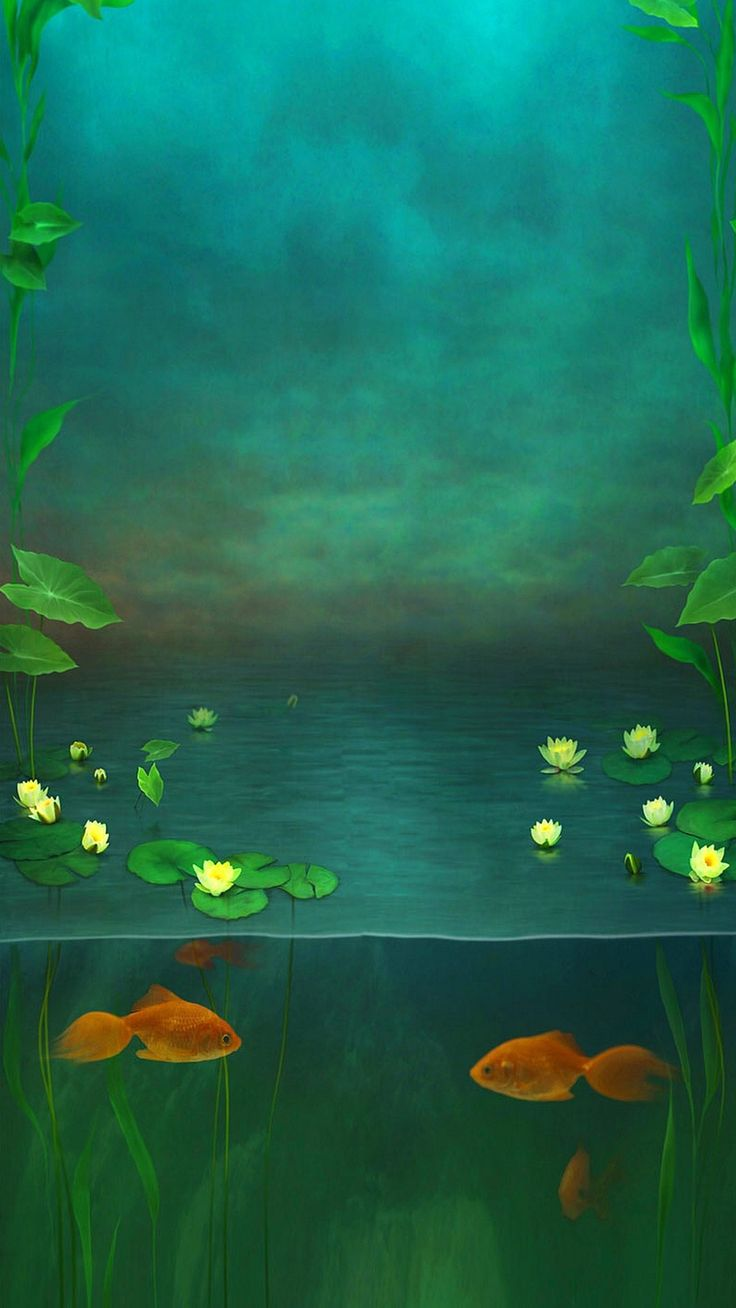 Http Www Vactualpapers Com Gallery Fish Pond Hd Mobile Wallpaper Free Wallpaper Backgrounds