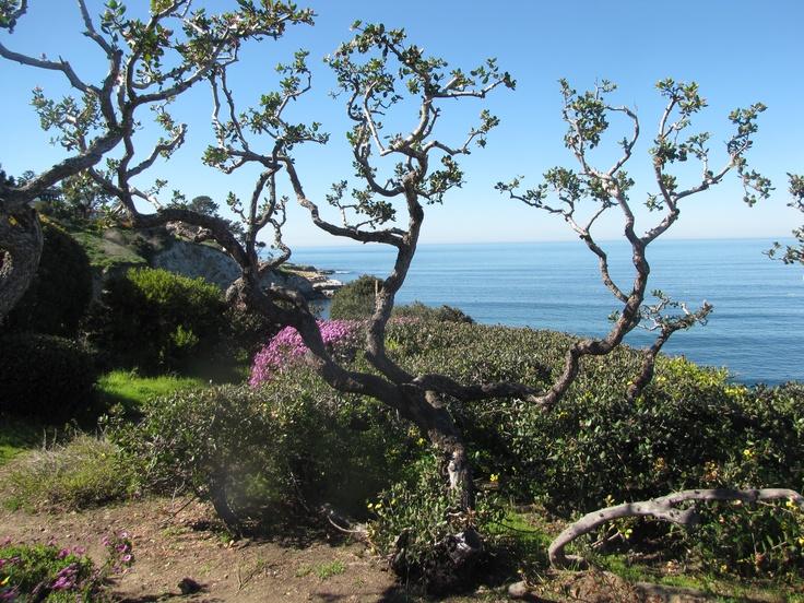 La Jolla, CA: Beautiful Places, La Jolla