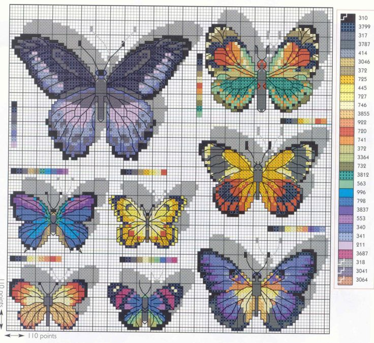 Gallery.ru / Фото #43 - насекомых * insects - esstef4e