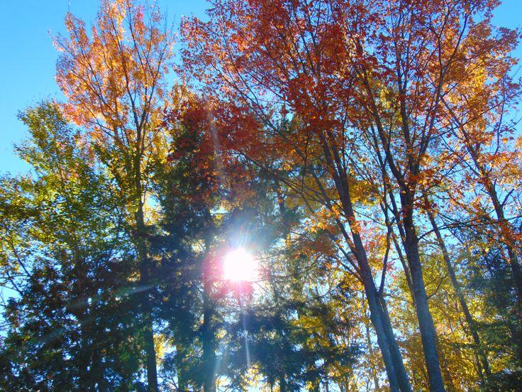 Sun in the woodland | Photo by @shanarahsphotos