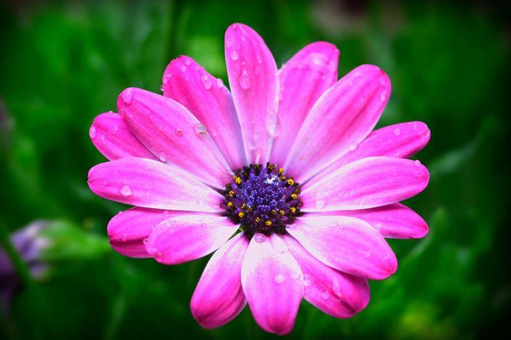 #flower #spring / seguici su www.cocoontravel.uk