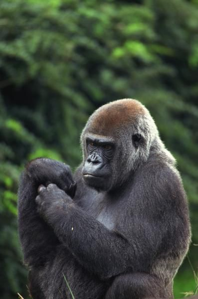 Are There Animals in Heaven | Amazon Rainforest Animals Amazon rain forest is a heaven for animals ...