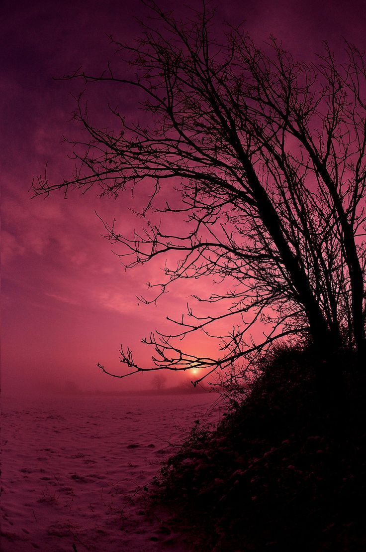 Trees in Silhouette: