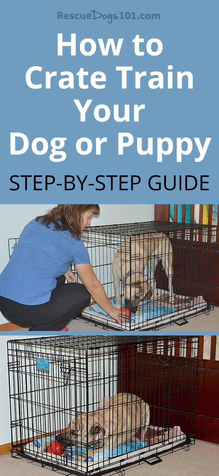 How To Crate Train Your Dog Or Puppy In 3 Easy Steps Training