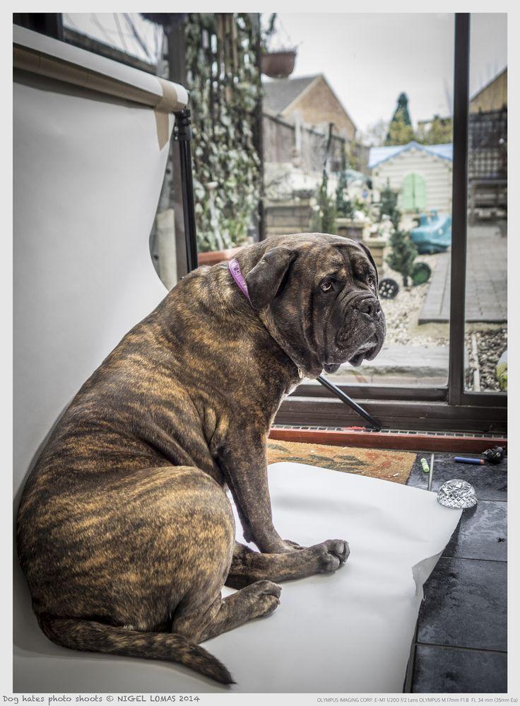 Dog hates photo shoots by Nigel Lomas on 500px