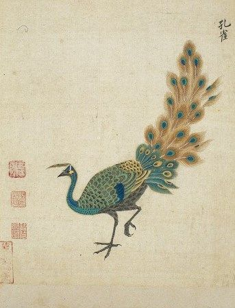 Ming herbal: Peacock   Zhou Rongqi (Ming period, 1368-1644)   1630   The Wellcome Library   CC BY