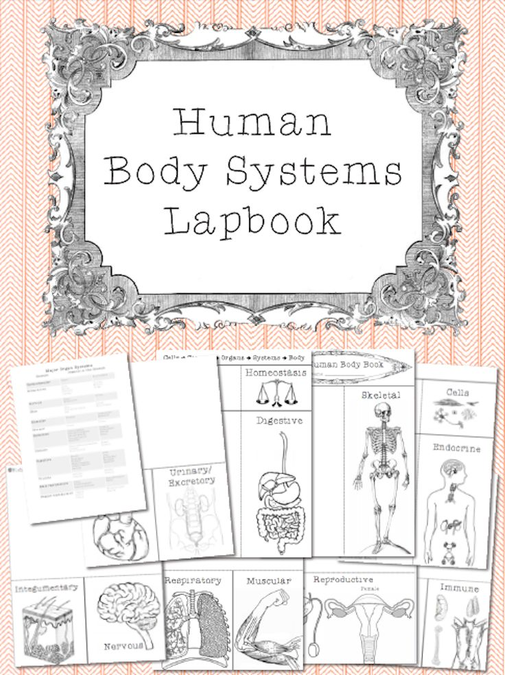 This is a lapbook set that includes materials to construct a lapbook about the 11 human body systems, cells and homeostasis.