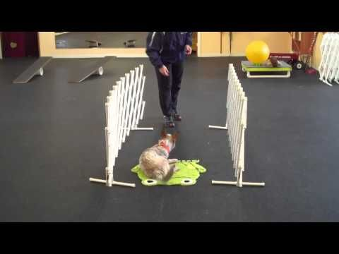 Darwin - Treibball Puppy Training - YouTube
