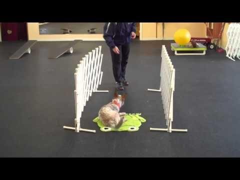 Darwin - Treibball Puppy Training - YouTube