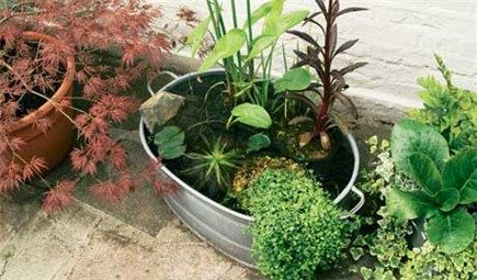 DIY How to make a mini-pond {using a metal basin or other large container}