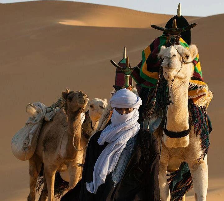 фотоаппарат картинки кочевников пустыни сняла свежее видео