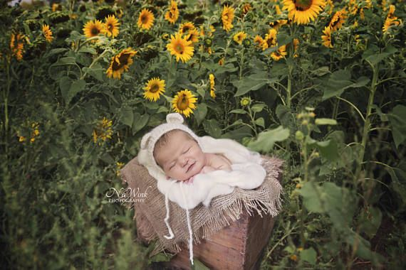 Sunflower Newborn Digital Backdrop// Newborn Photography