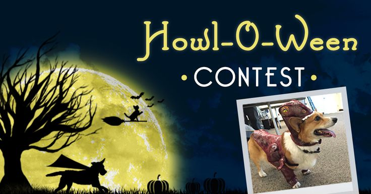 Submit a picture of your pet wearing an awesome costume for a chance to win! Click the link in the pin to enter!