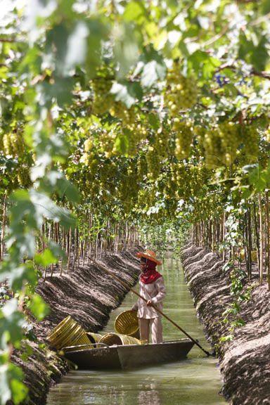 Floating Vineyards - Thailand. Wouw! Wat voor terroir zou er uit de wijnen, op water in tropisch climaat - komen?