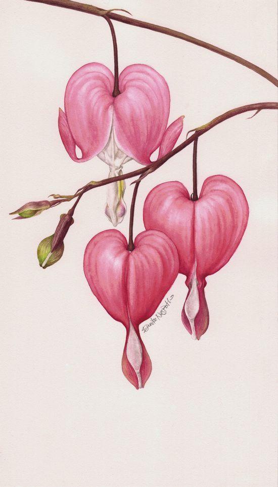 Eunike Nugroho Dicentra - O coração de sangramento Retrato Botânico II - flor em Behance