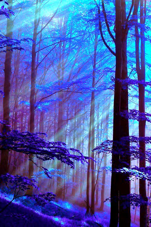 sunshine in the forest  .