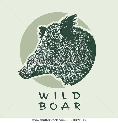 Head Of Wild Boar. Vector illustration in engraving style.