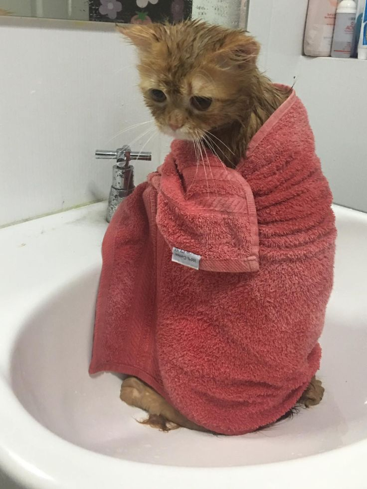 This poor cat!!! Look at its face!!!! The poor thing is looks so sad!  This makes me sick!  Cats clean themselves they dont need us ruining their day!  And then this person takes a pic!!!??? Really asshole and then you post it!!  God help these souls and save the animals!