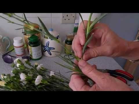 How To Grow Carnations From Cuttings - YouTube