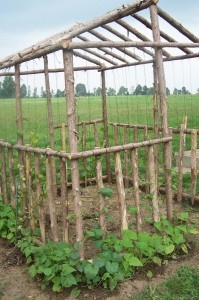 Forget rows... Grow beans  over  a house-shaped frame -  fun for the kids!