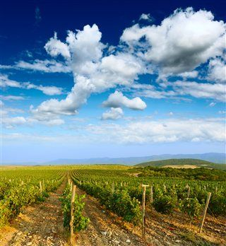 Top 5 Wine Towns of the Costa Blanca