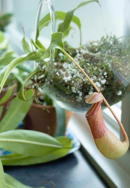 How To Set Up A Carnivorous Plant Terrarium Diy Pinterest