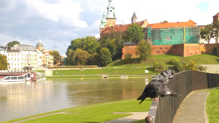 pingeons and wawel Castle