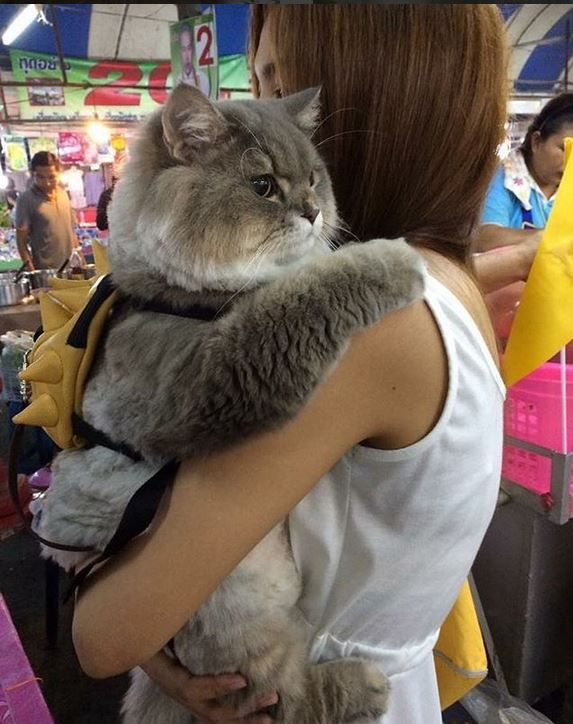 Here's a little extra cuteness; the fluffy cat from Thailand. – Tiere