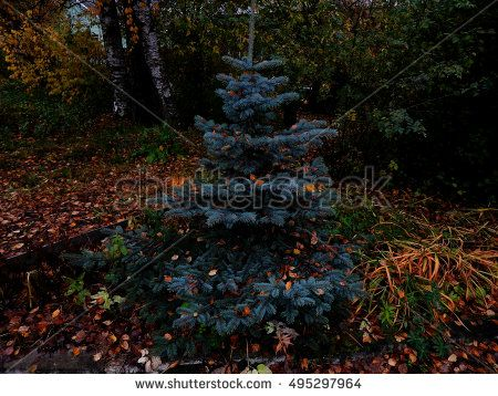 Decorative tree with autumn leaves wet
