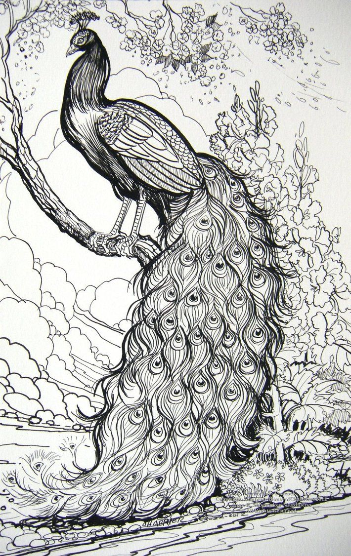 Fairy Tale Peacock by HouseofChabrier on DeviantArt