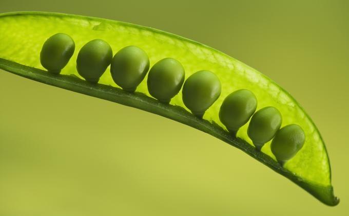 Alimentos saludables listado de plantas leguminosas  eHow en