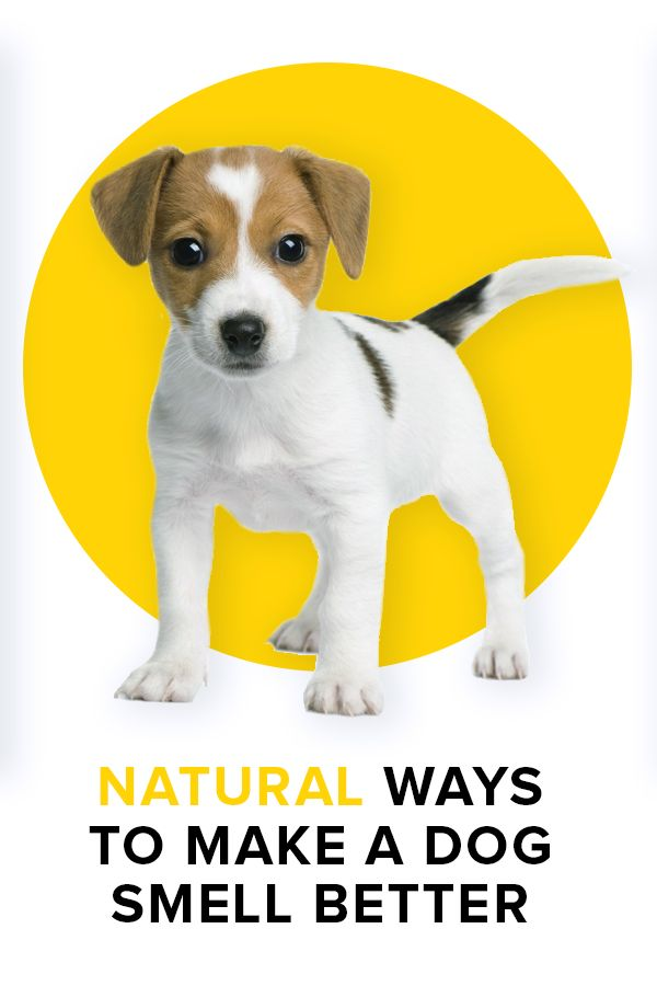 Natural ways to make a dog smell better